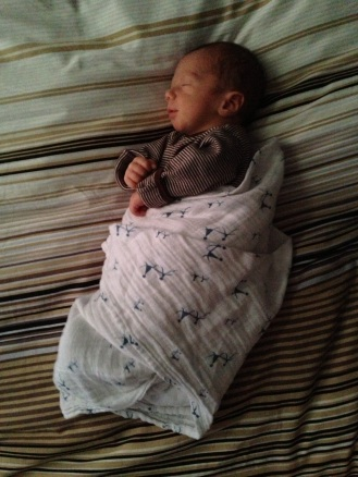 Enjoying an arms-free swaddle.