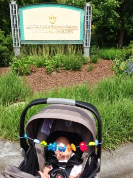 Finn before his exciting tour of the US Botanical Gardens.